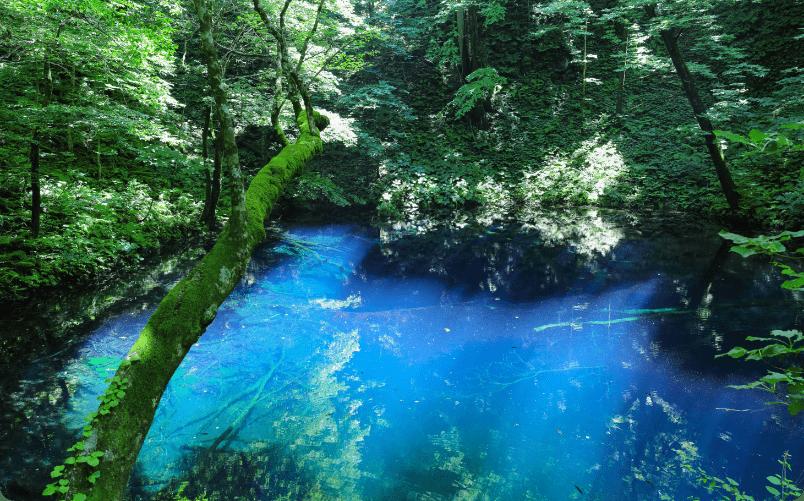 春 青森県・白神山地