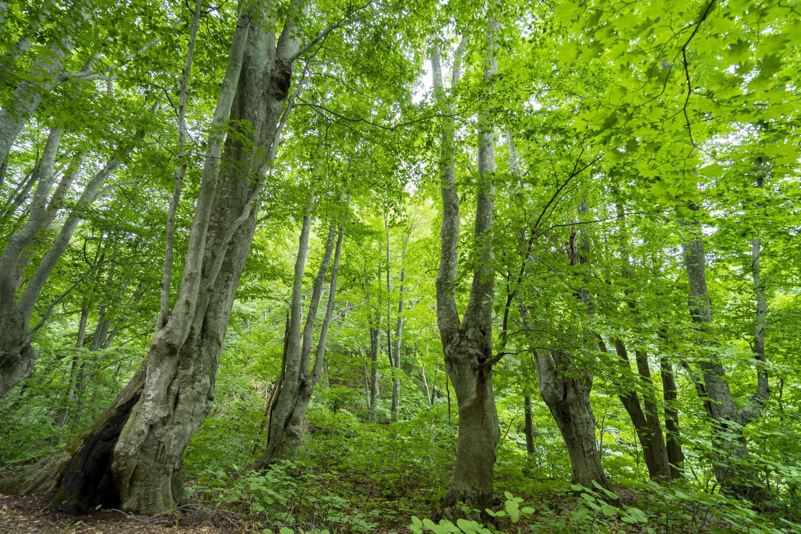 都市空間に、森の原音を。
